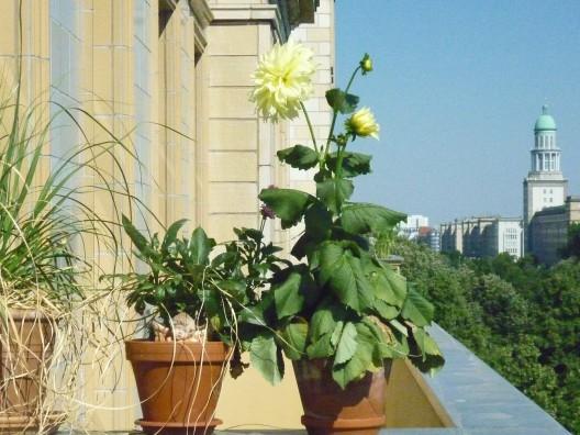 20120315 Balkonpflanzen Nehle Hoffer-528x396 in Dein Grün in der Stadt – Fotowettbewerb des BUND