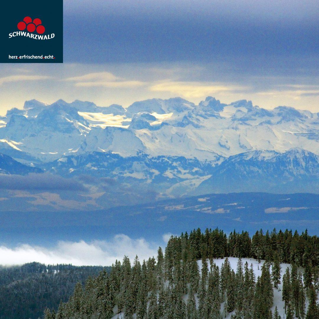 Alpenpano AchimMende Schwarzwald-1080x1080 in Freiburg und der Schwarzwald bei Instagram