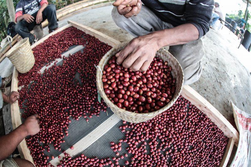 ES5A9008-800x533 in TEIKEI Coffee – Solidarisch gehandelter und gesegelter Kaffee